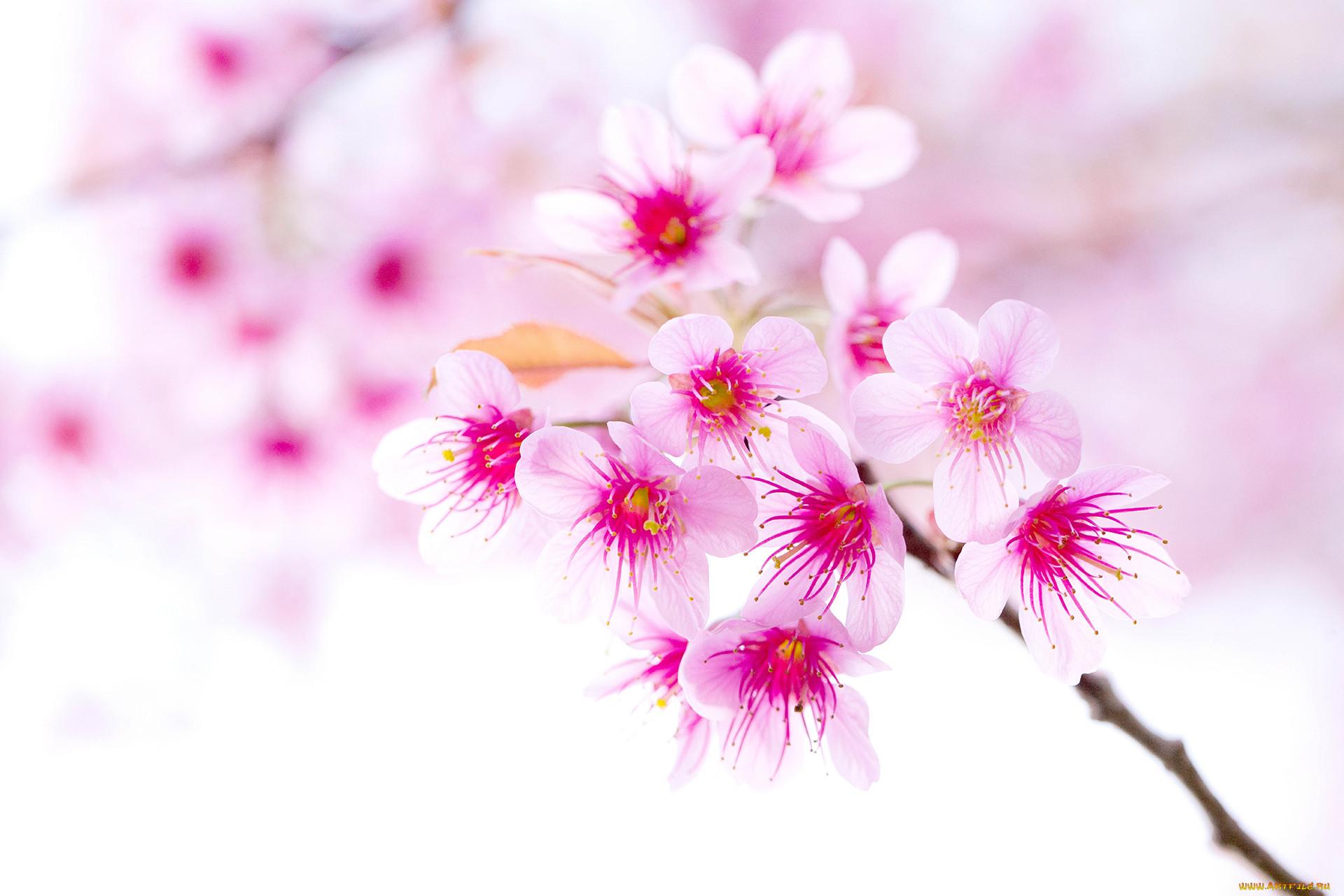 Картинки цветы а4
